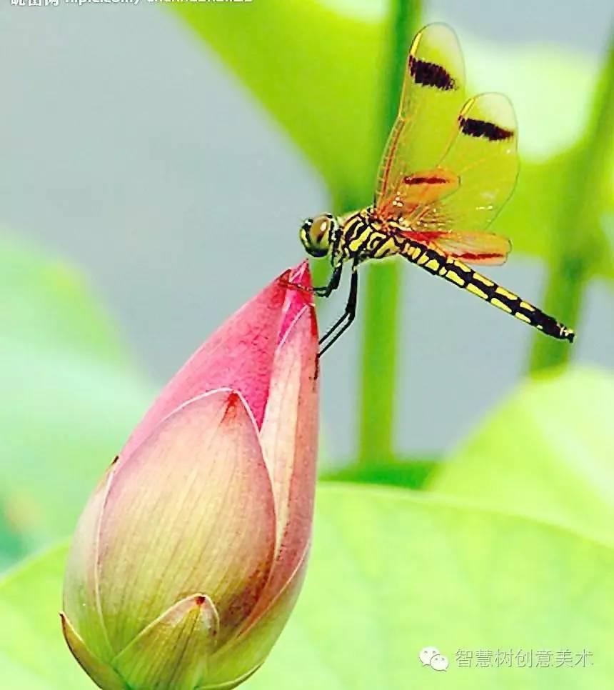 【启蒙趣画】立体蜻蜓